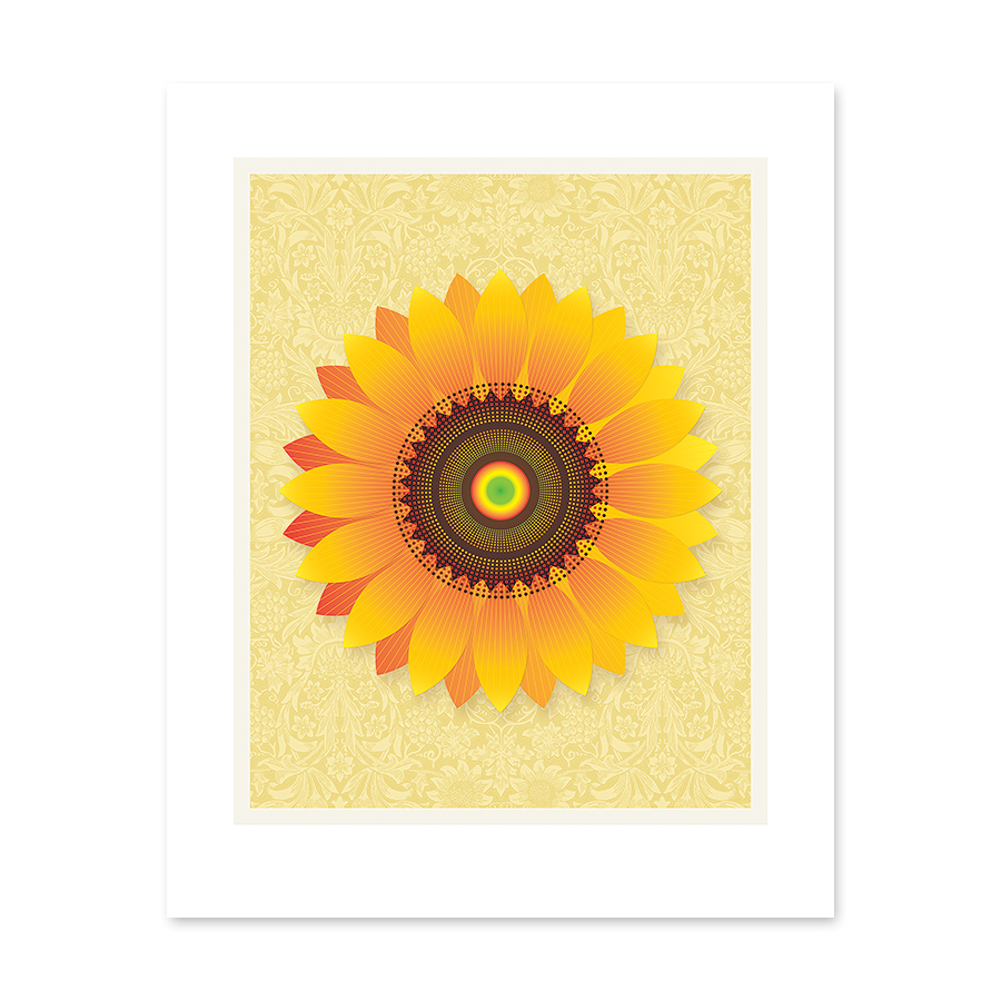 flowers_sunflower_2-900