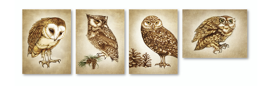 lzd-cards-owl-900